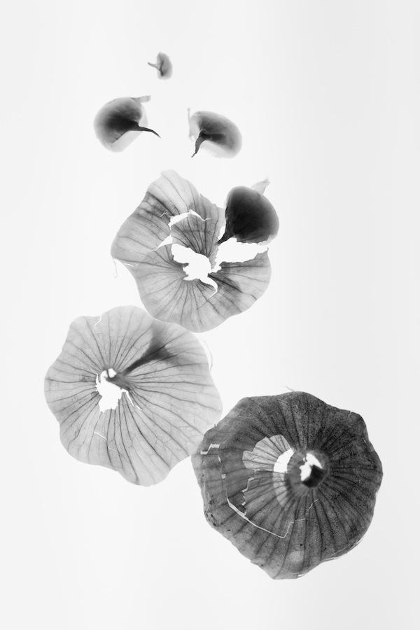 Photographie culinaire - Laetitia Vasseur