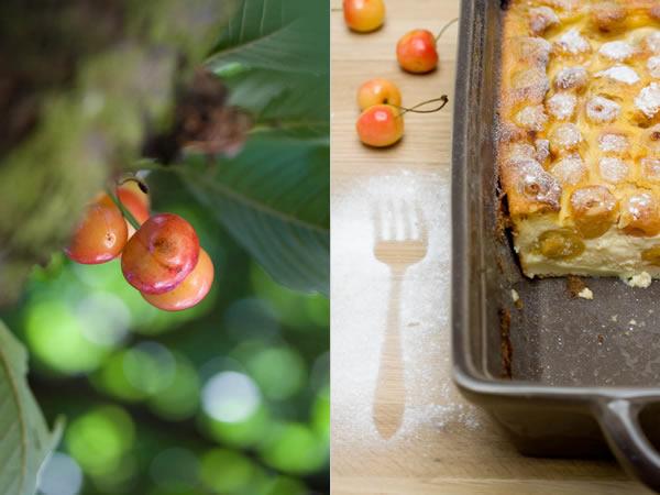 Photographie culinaire clafoutis-aux-cerises