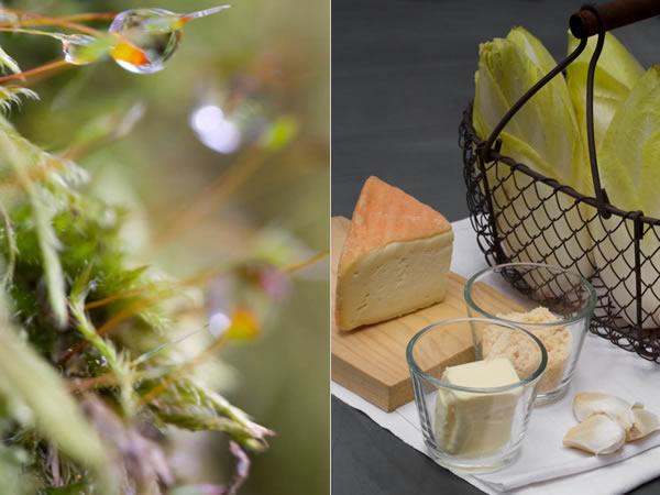 Photographie culinaire gratin d'endives au maroilles